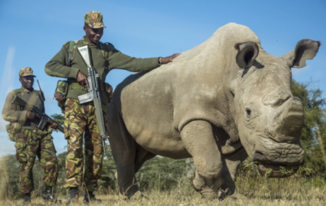 Last Male White Rhino Passes Away