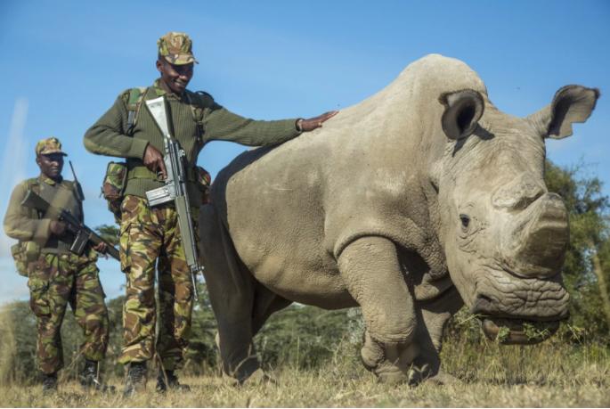 Last Male White Rhino Passes Away